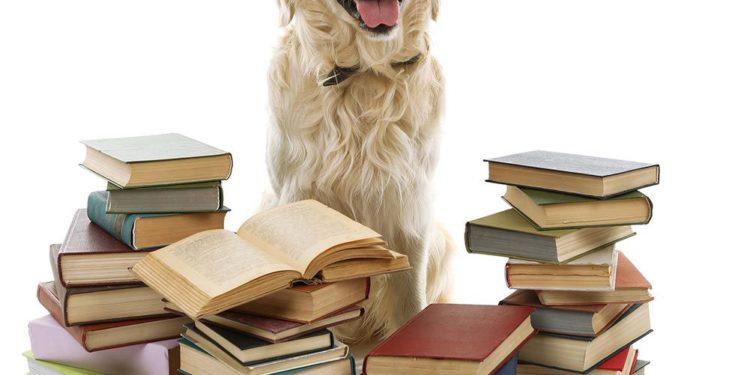 labrador with dog training books around it