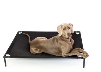 weimaraner on an elevated dog bed