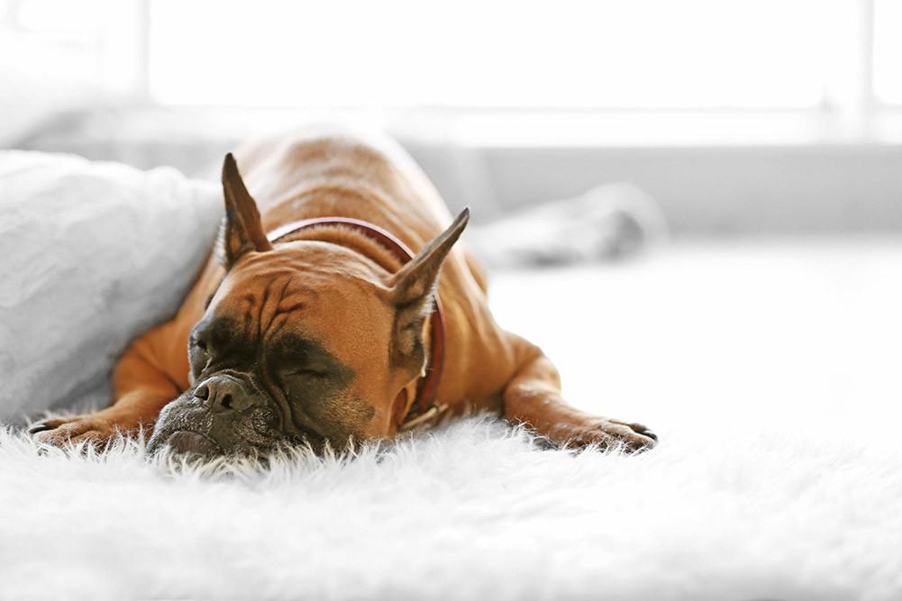 Top 12 Best Flea Powder For Carpets