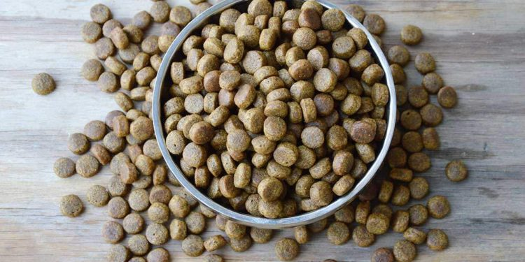 dry kibble in and around a bowl