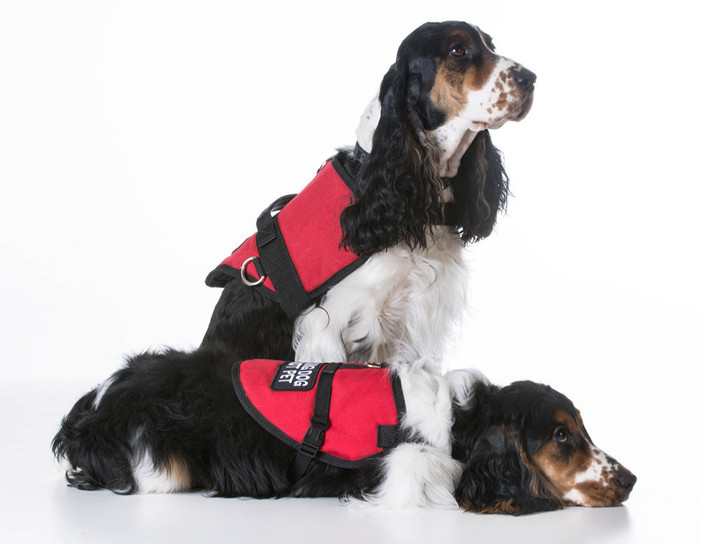 Best Service Dog Vests And Harnesses
