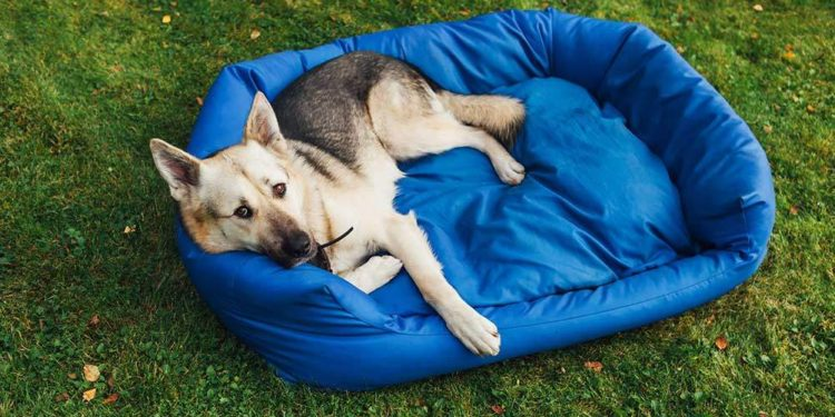 dog laying in a blue bed on the lawn