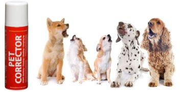 dogs in a row and pet corrector spray on the side