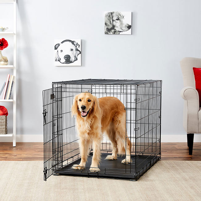 MidWest iCrate Single Door Fold & Carry Dog Crate