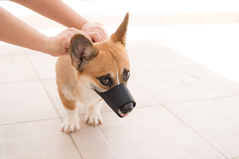 Top 32 Best Dog Muzzles For Small