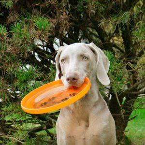 hard frisbee dog