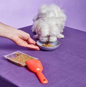 dog eating their ollie food