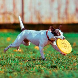 soft frisbee dog