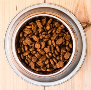 dog food plate