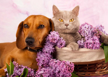 Dog and A cat Laying in a Basket