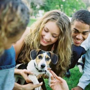 Dog in a social enviroment