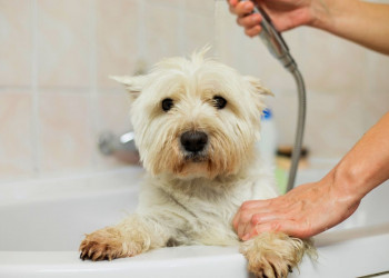 fair for bathing featured image dogs struggles