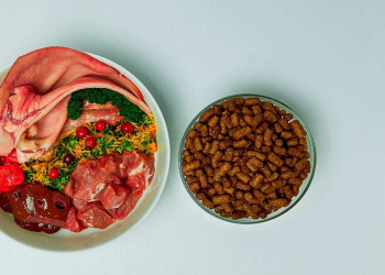 raw dog food featured image