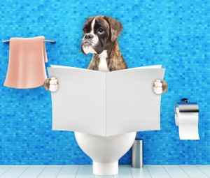Dog digesting food and sitting on toilet