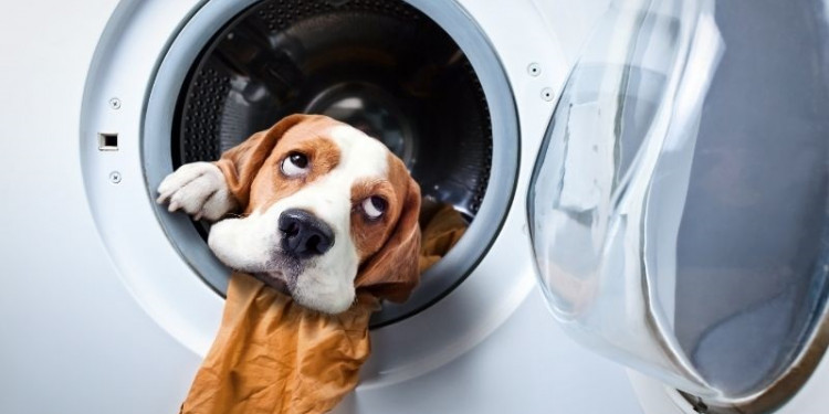 Dog inside washing machine
